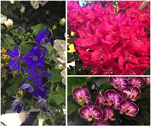 flowershowsm